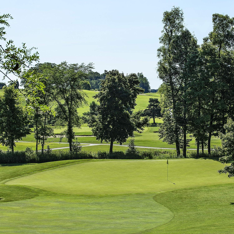 Outsidepride Penncross Golf Putting Green famous Grass Creeping 5 popular Bent Se