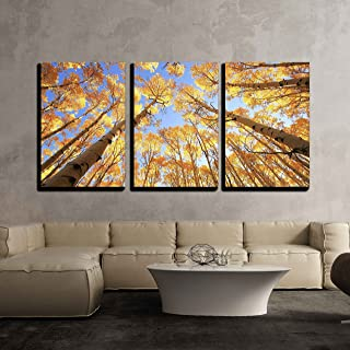 wall26 - Aspen Trees with Fall Color - Canvas Art Wall Decor - 24