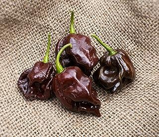 25 Heirloom Red Tobago Scotch Bonnet Pepper Seeds M 197