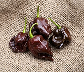 Chocolate Scotch Bonnet Heirloom Pepper Premium Seed Packet + More