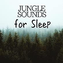Jungle Sounds for Sleep - Rain & Chirping Birds