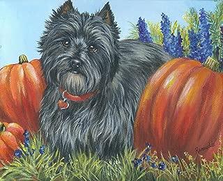 Cairn Terrier Autumn-NC