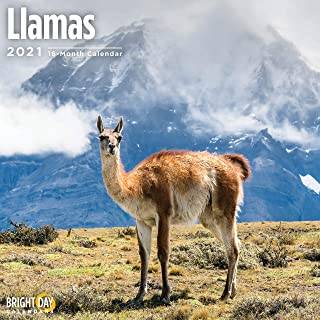 Bright Day Calendars 2021 Llamas Wall Calendar by Bright Day, 12 x 12 Inch, Cute Fluffy Funny Farm Animal