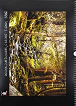 Forests - places of yearning and silence 2020 - Black Edition - Timocrates wall calendar with UK holidays / picture calendar / photo calendar - DIN A3 (42 x 30 cm)