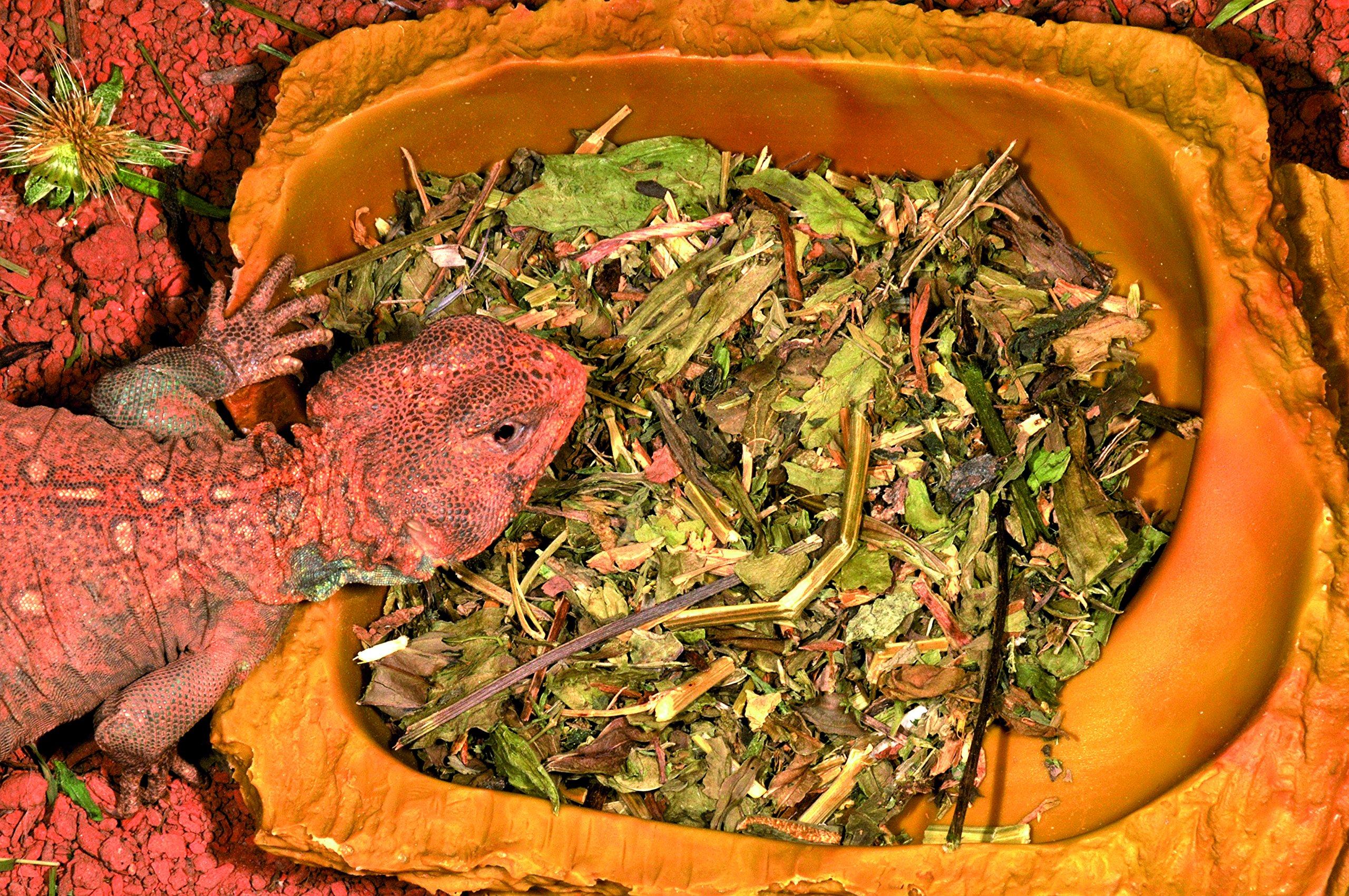 Alimentación reptiles Lucky Reptile herbmix 50 gr.: Amazon.es: Productos para mascotas