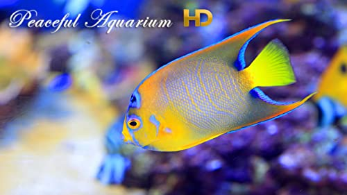 『Peaceful Aquarium HD』のトップ画像