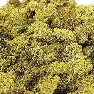 Moss - Reno de Finlandia, color verde, verde oliva y natural