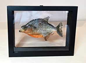 fish taxidermy