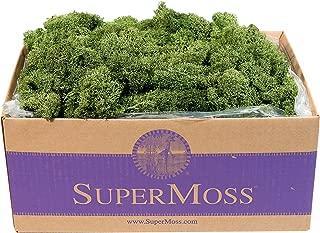 SuperMoss (25155) Reindeer Moss Preserved Box, 3lb, Basil