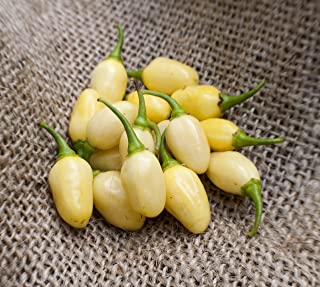 Best peruvian white habanero Reviews