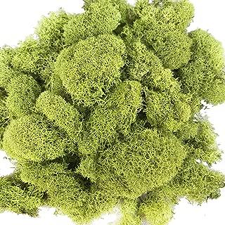 Best moss for terrarium Reviews