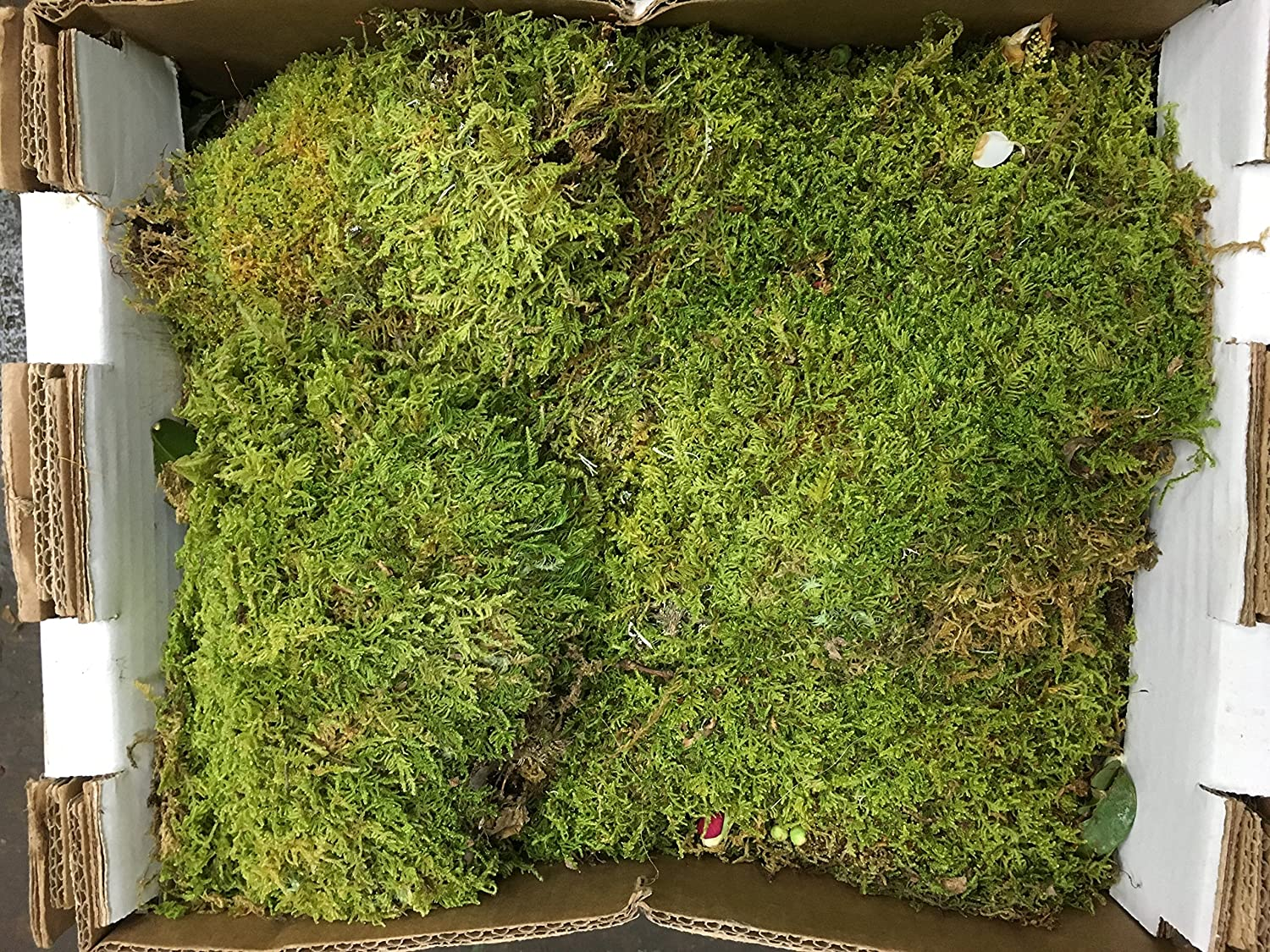 fresh sheet moss. 3 box. to Portland Mall 5lb OFFicial mail order