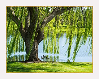Willow Tree In Spring Breeze - Photographic Poster Print on Sale (16
