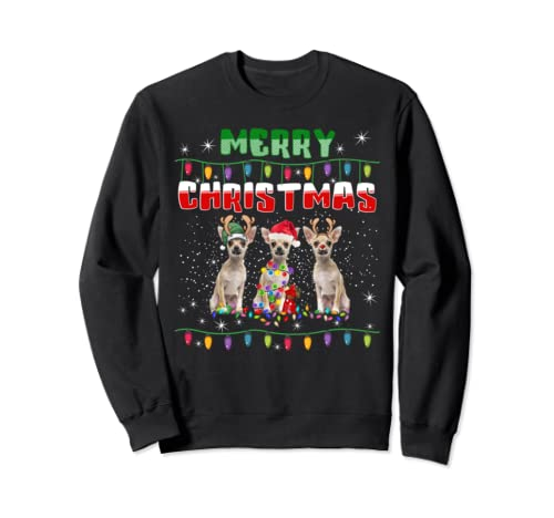 Chihuahua Christmas Lights T Shirt Merry Christmas Dog Lover Sweatshirt