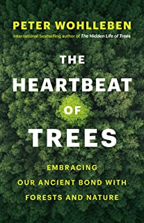 The Heartbeat of Trees: Embracing Our Ancient Bond with Forests and Nature