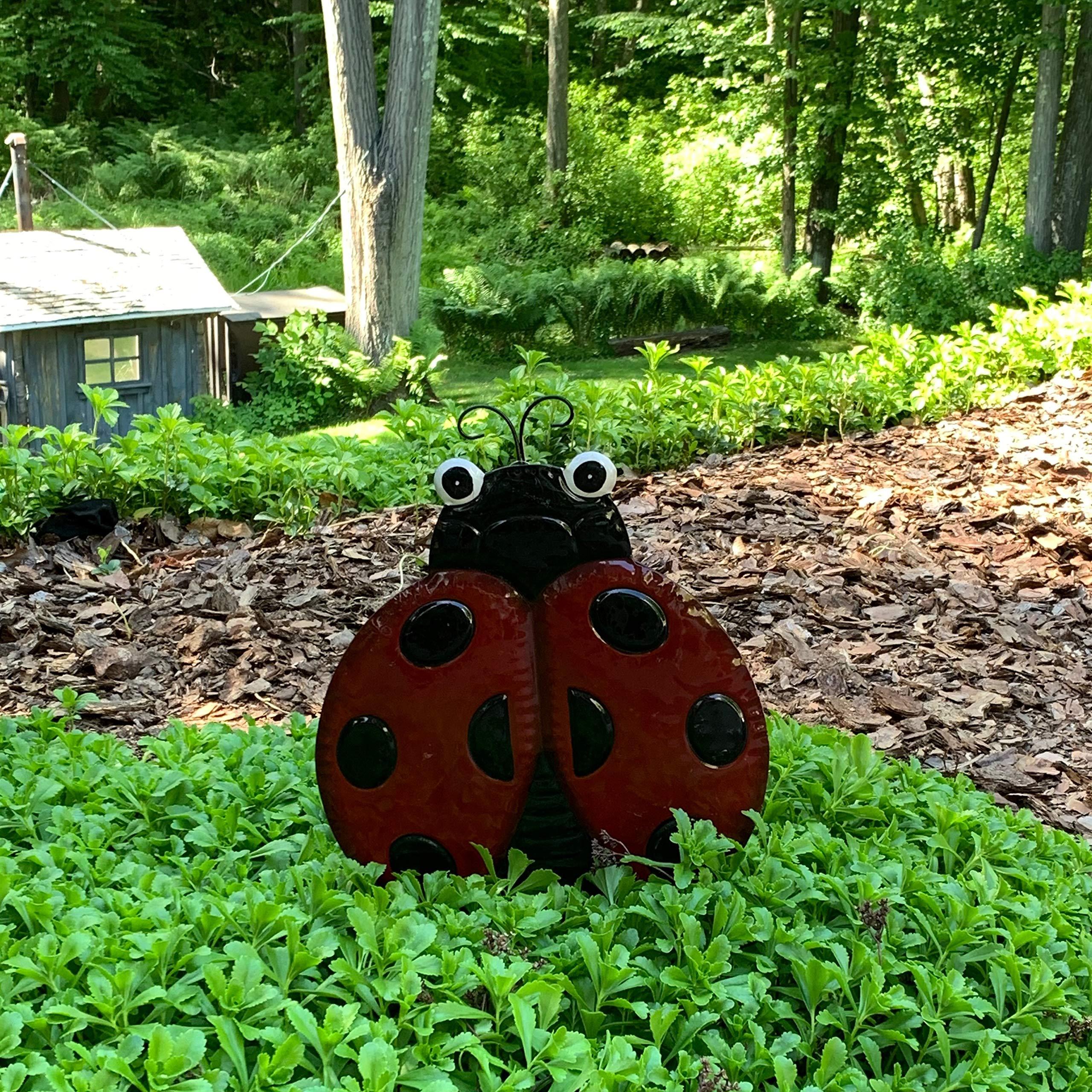 Decoración de jardín de Mariquita de Metal Decorativa en 2 estacas estabilizadoras – Decoración de Cama de jardín – Complementos Hierbas Jardines y Flores Camas: Amazon.es: Jardín