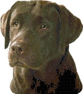 Chocolate Labrador Retriever Dog Portrait Counted Cross Stitch Pattern