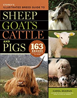 Best the sheep and the pig Reviews