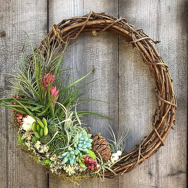 Living Succulent Air Plant Grapevine Wreath 12 Inch
