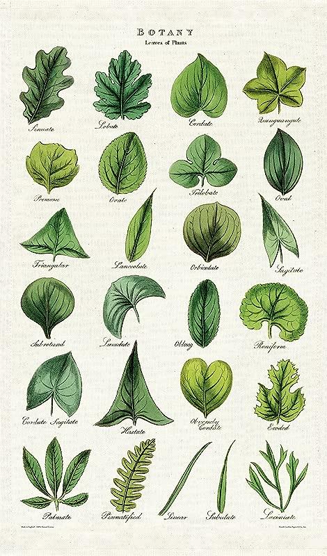 Cavallini Co Botany Tea Towel