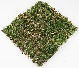 War World Scenics 10 mm gammal ek skog självhäftande statisk gräs häll x 100 – modellbana modellbygge tablettop terräng di...