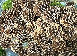 50 Pine Cones - Wedding Pine Cones, Wreathe Pine Cones, Natural Pine Cones