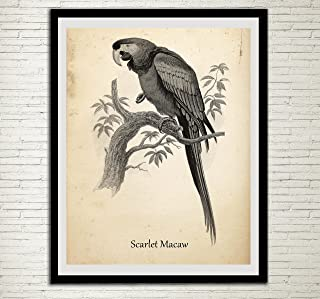 Vintage Parrot Print Antique Exotic Bird Home Decor Animal Print Wall Art Scarlet Macaw Parrot Wall Hanging