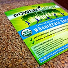 Certified Organic Non-GMO Wheatgrass Seeds - 1 LB Wheat Seed - Guaranteed to Grow