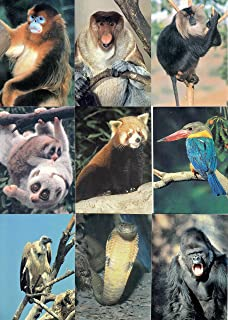 SAN DIEGO ZOO 1993 CARDZ COMPLETE BASE CARD SET OF 110 ANIMALS