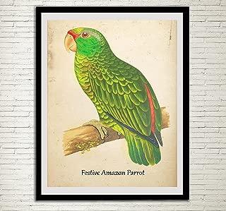vintage parrot prints