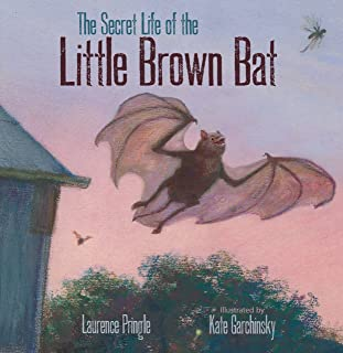 The Secret Life of the Little Brown Bat