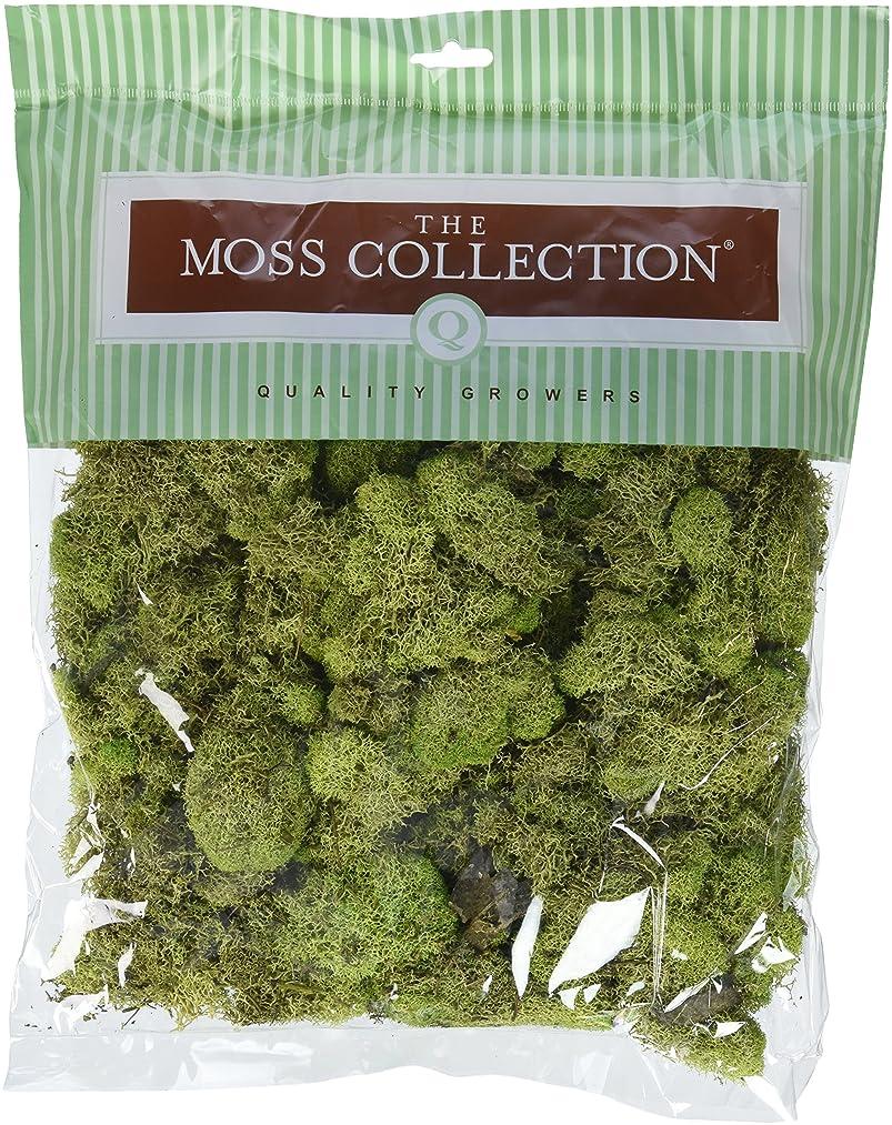 Quality Growers QGR2059 Moss 5.68qt Reindeer Spring Green
