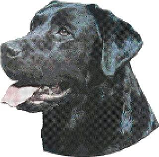Black Labrador Retriever Dog Portrait Counted Cross Stitch Pattern