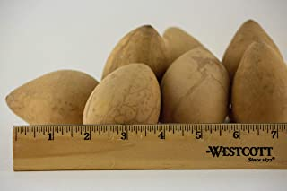 Dried Egg Gourds 10 Pieces, great for crafting