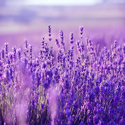 Purple Flowers By Peder B Helland On Amazon Music
