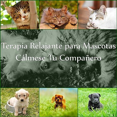 Terapia Relajante para Mascotas: Cálmese Tu Compañero, Música de Piano Suave con Sonidos de