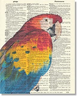 Vintage Dictionary Art Print Upcycled 8x10 - Blue Gold Macaw Parrot