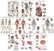 10 Pack - Anatomical Poster Set - Laminated - Muscular, Skeletal, Digestive, Respiratory, Circulatory, Endocrine, Lymphatic, Male & Female Reproductive, Nervous System, Anatomy Chart Set - 18