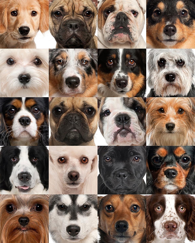 Dog Heads Collage 504 Piece Jigsaw Puzzle 16  X 20