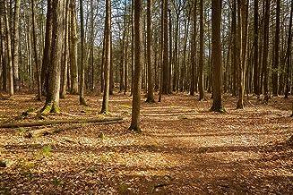 Ricketts Glen Forest Trail 5x7