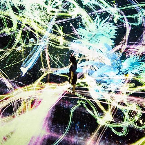 追われるカラス、追うカラスも追われるカラス、そして衝突して咲いていく - Light in Space