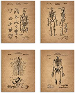 Vintage Human Skeleton Patent Print - Set of 4 (8 inches x 10 inches) Photos Wall Decor - Anatomical Medical Art