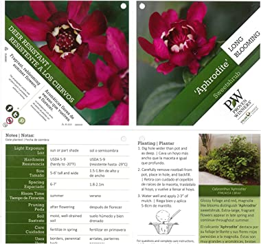 Aphrodite Sweetshrub (Calycanthus) Live Shrub, Red Flowers,4.5 in.Quart