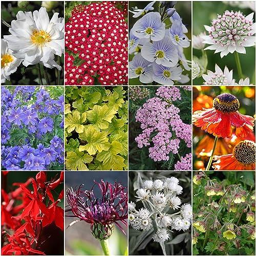 Cottage Garden Plants: Amazon.co.uk