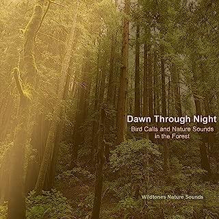 The Forest Awakens: Dawn Bird Calls with Wood Thrush