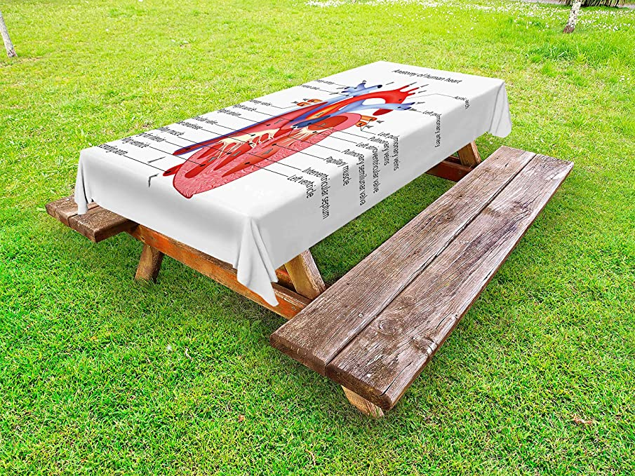 Ambesonne Educational Outdoor Tablecloth, Medical Structure of The Hearts Human Body Anatomy Organ Veins Cardiology, Decorative Washable Picnic Table Cloth, 58 X 84 Inches, Coral Red Blue