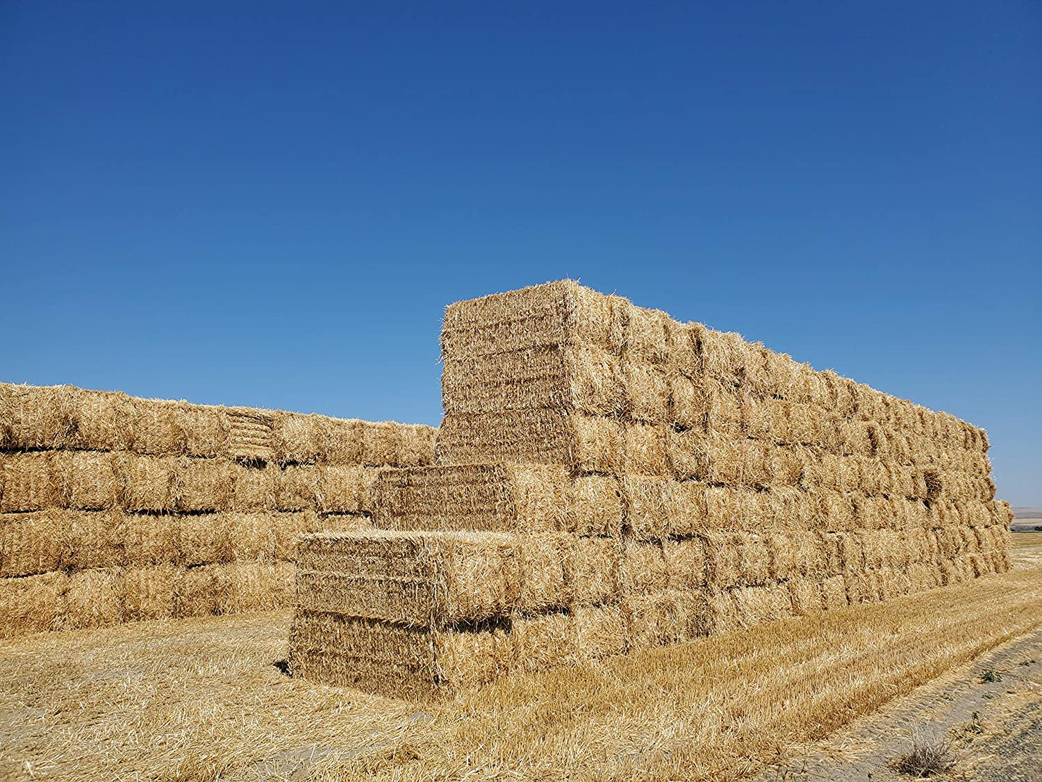 {New Harvest} Premium 100% Natural Max 42% OFF Harvested Straw 2 OFFer Wheat Grass