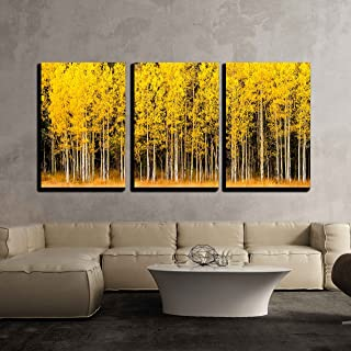wall26 3 Piece Canvas Wall Art - Stand of Changing Yellow Aspen Tree in Front of Dark Green Pine Trees - Modern Home Decor Stretched and Framed Ready to Hang - 24