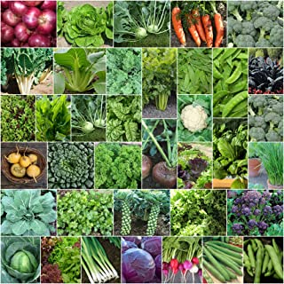Mixed Autumn Winter 4000+ Seeds Cool Season Heirloom Vegetable & HERB 40 Packets