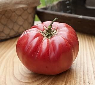 caspian pink tomato plants